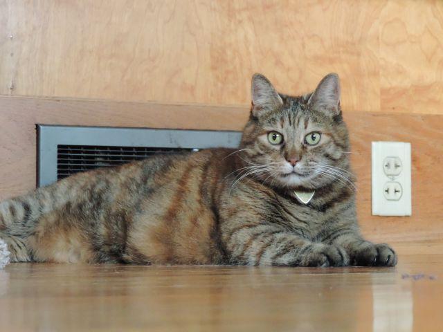 Lumpy, de enorme kat