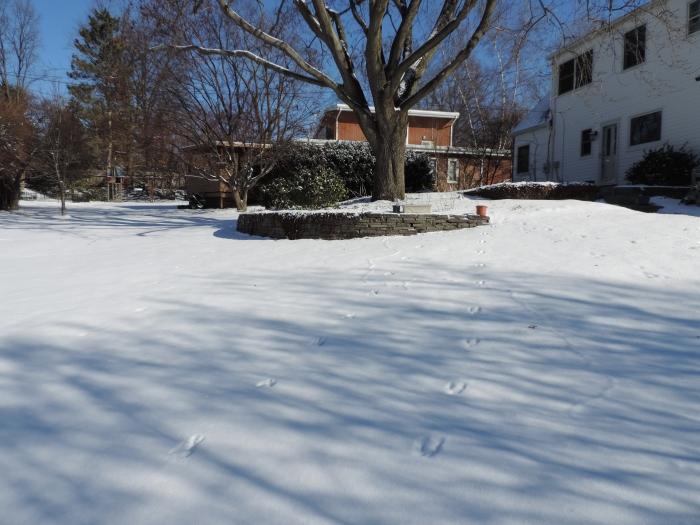 Sporen in de achtertuin