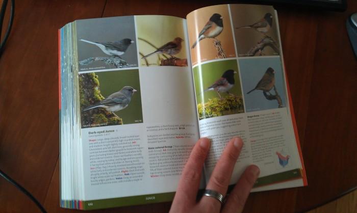 Mijn vogelgids