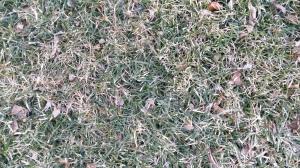Het gras wordt langzaam aan groen!
