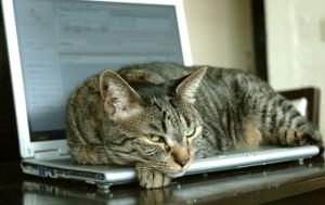 Ik dacht dat er zoiets was gebeurd: kat op de laptop... (NB: dit is Lumpy niet hoor...)