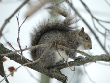 Eekhoorntje in de boom