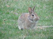 Een van de vele konijnen hier