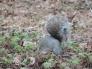 Eekhoorn op zoek naar eten