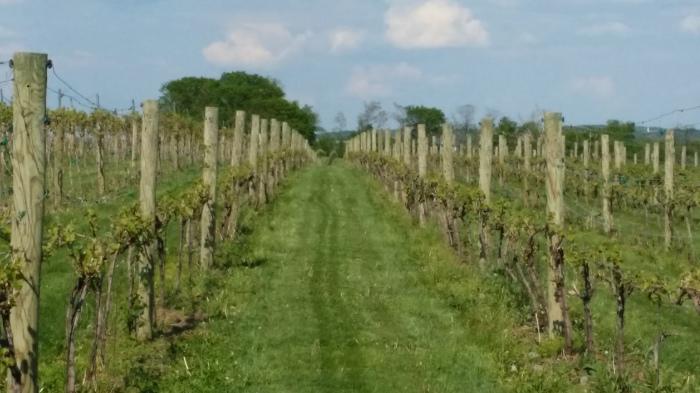 Cassel Vineyards. Met druiven uit Pennsylvania
