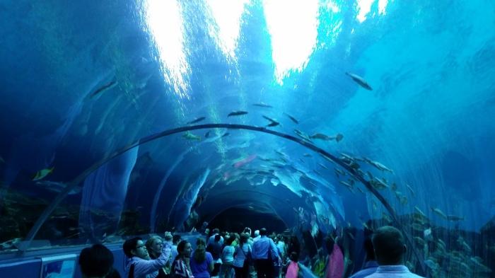 De beroemde tunnel in het aquarium in Atlanta