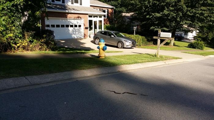 Een slang voor ons huis