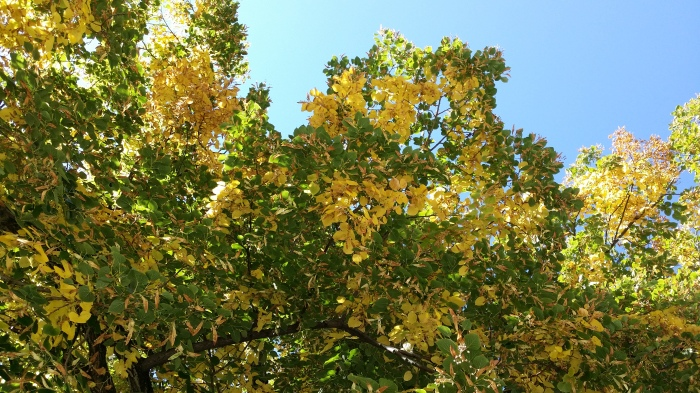 Gele blaadjes aan de bomen. Het wordt herfst!