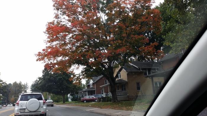 Een bijna-rode boom op North Atherton