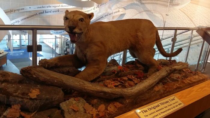 De echte Nittany Lion. Nu uitgestorven in het wild. Dit is een opgezet exemplaar