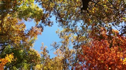In onze achtertuin. Kijk omhoog...!