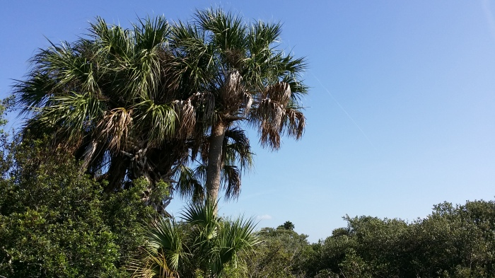 Palmbomen rond de baai