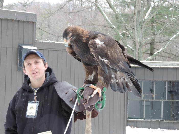Een golden eagle
