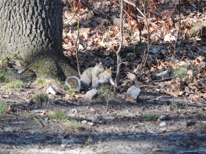 En de eekhoorns zitten ook achter elkaar aan (of op elkaar. Ook goed)