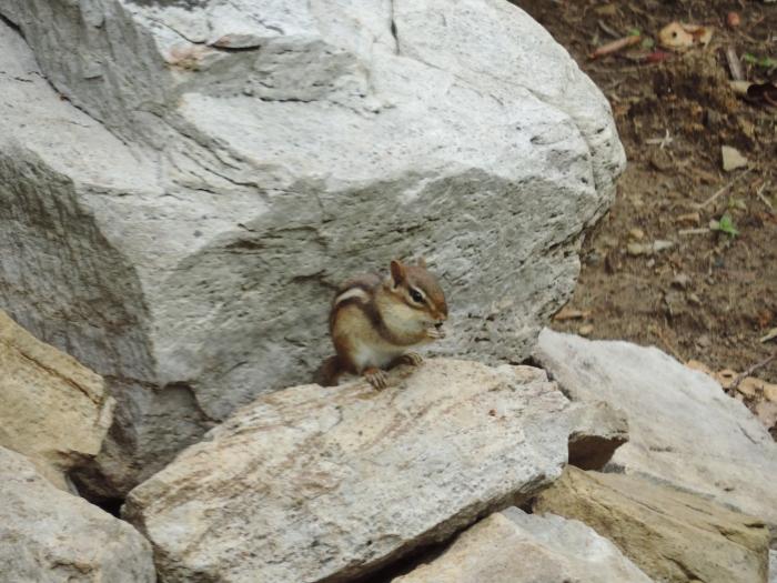 De chipmunks zijn er ook weer (nomnom... eikeltjes...)