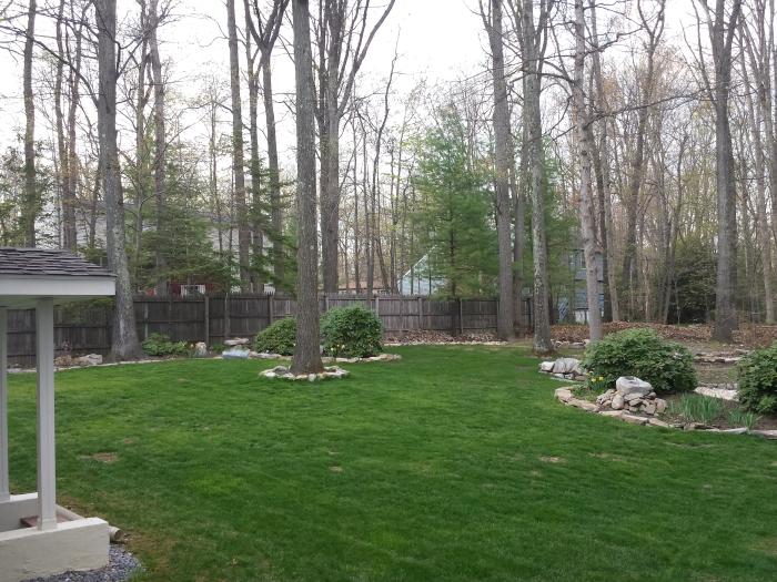3 mei: zeer groen gras!