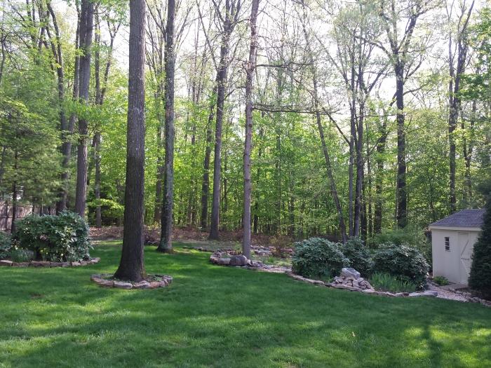 10 mei: opeens heel veel groene blaadjes aan de bomen!
