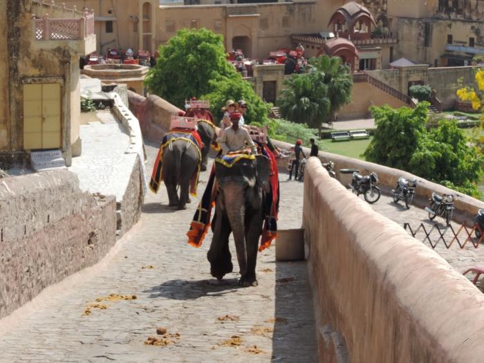 Met de olifant naar Amber Fort