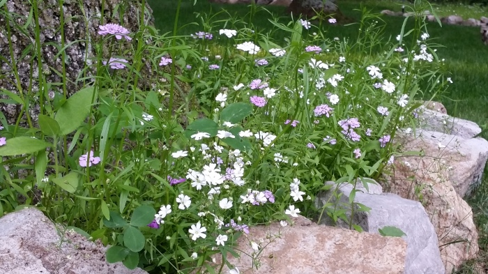 Witte en roze bloemetjes