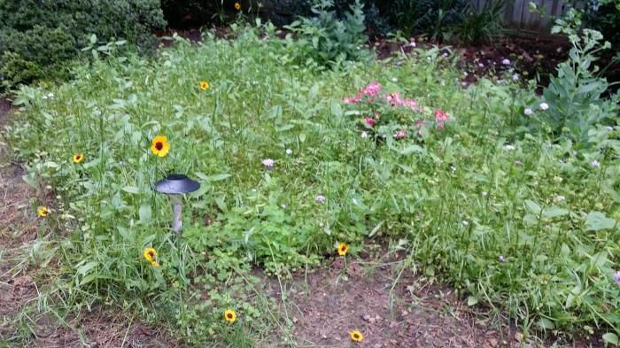 En nu ook gele bloempjes!