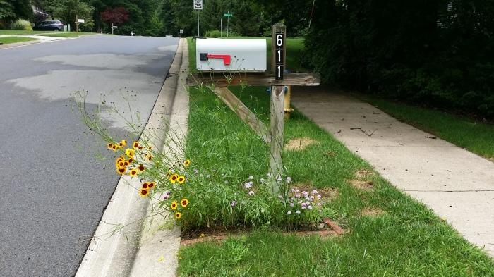 Zelfs bij de brievenbus! Maar die stonden er vorig jaar vast ook al.