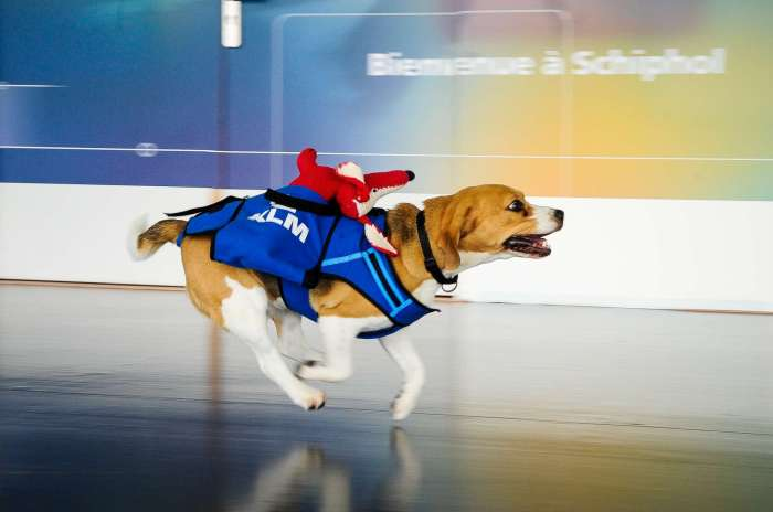 Sherlock, de 'lost and found' hond van KLM