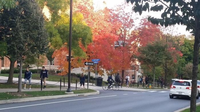 Vandaag op weg naar downtown... rode bomen op de campus