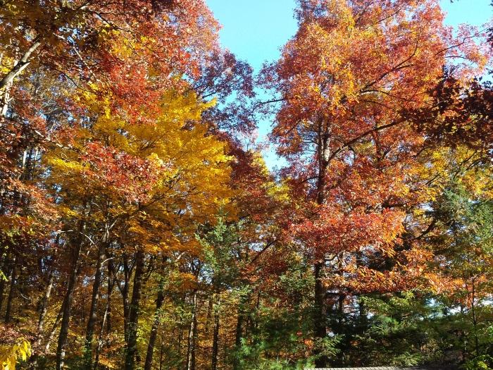 Onze kleurrijke achtertuin, eind oktober