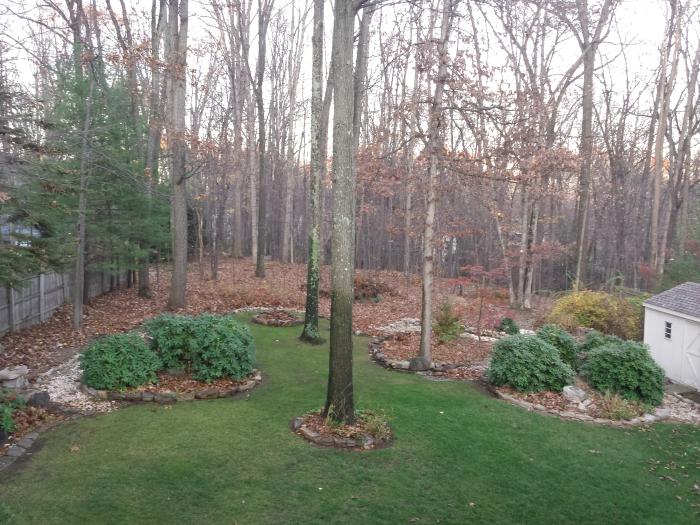 En nu zijn de bomen in de achtertuin bijna kaal...
