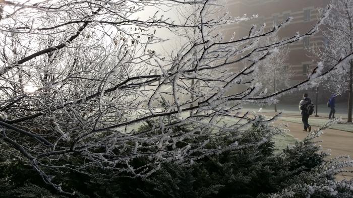 Nog zo'n plaatje. Bevroren mist op de campus
