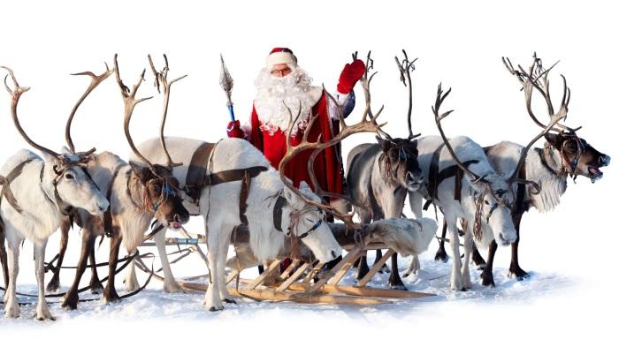 De rendieren van Santa Claus!