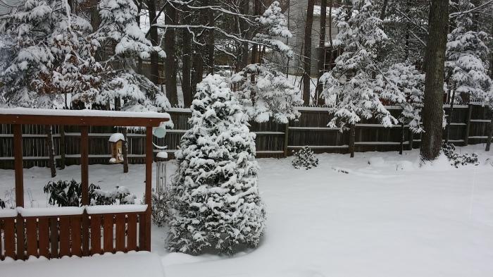 Sneeuw in onze achtertuin. Alles is wit!