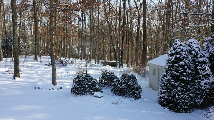 En nog een keer: sneeuw in de achtertuin