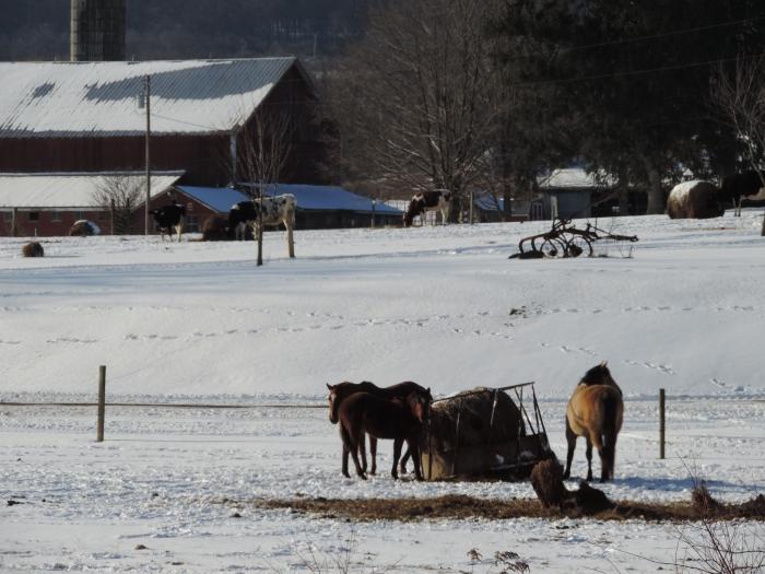 Agrarisch landschap met paarden in de sneeuw