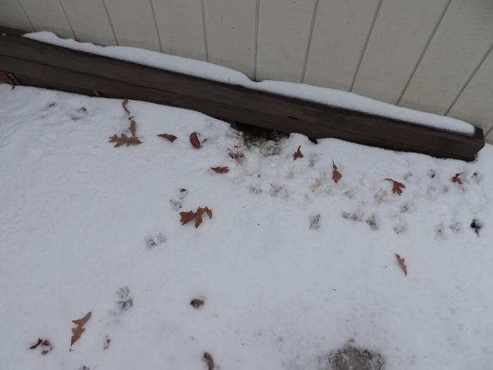 De possum woont (soms) onder het tuinhuisje