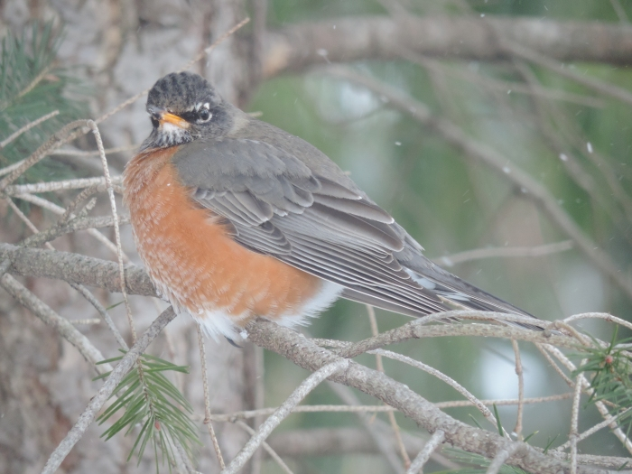 De Red Robin