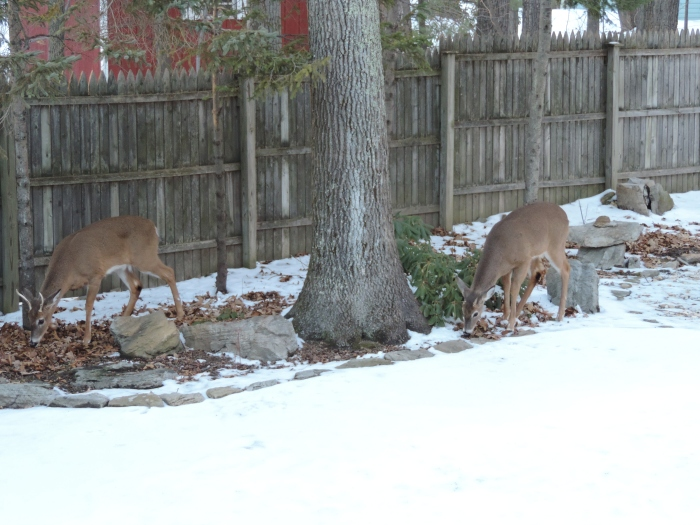Hertjes in de tuin!