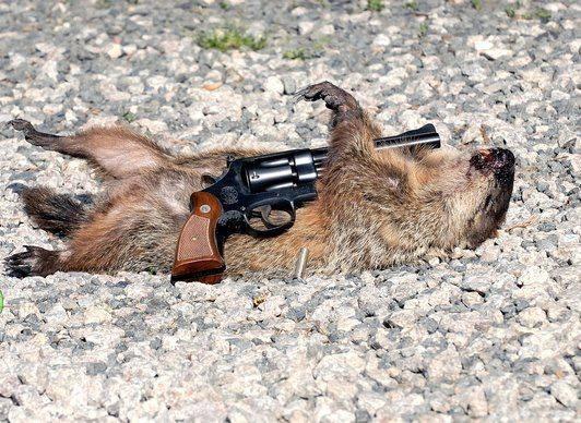 De dood van Phil de Groundhog