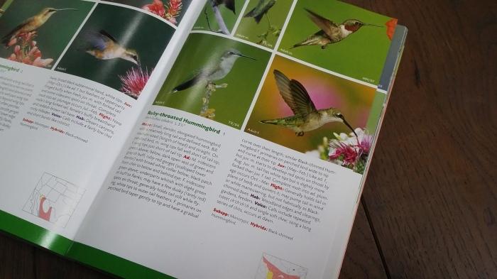 De kolibrie in mijn vogelgids