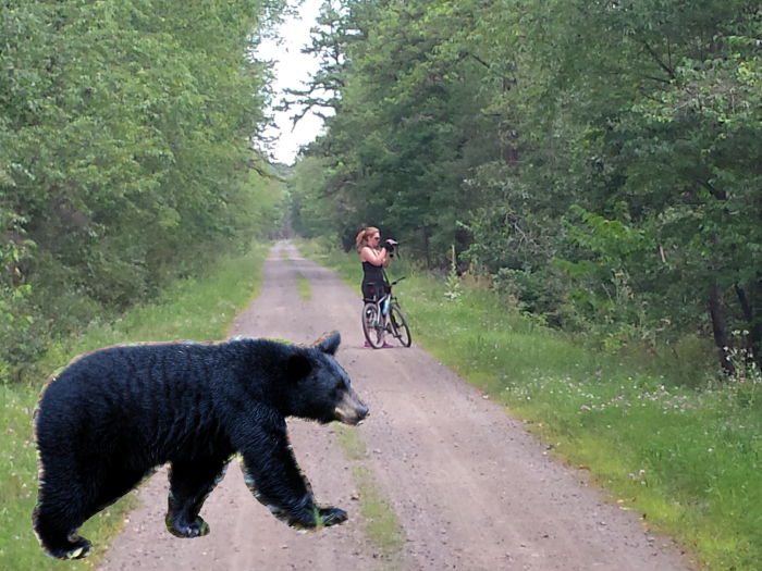 Knutselfoto van de beer in het bos (helaas had ik geen camera bij me)