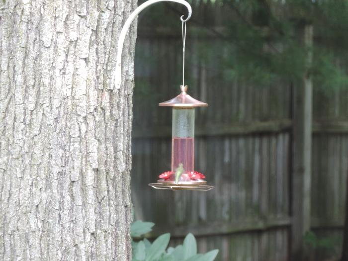 Die groene waas is de kolibrie. Echt waar!