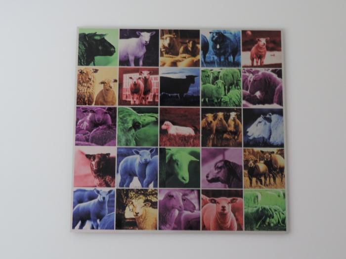 """""""Colored Wool"""" in onze schaapkamer"""
