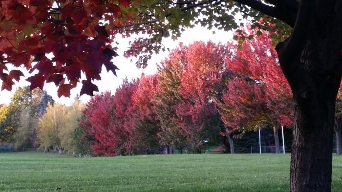 Bomen op weg naar school...