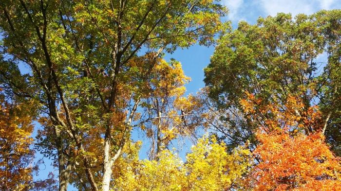 Dit zijn onze eigen bomen. Mooi he!
