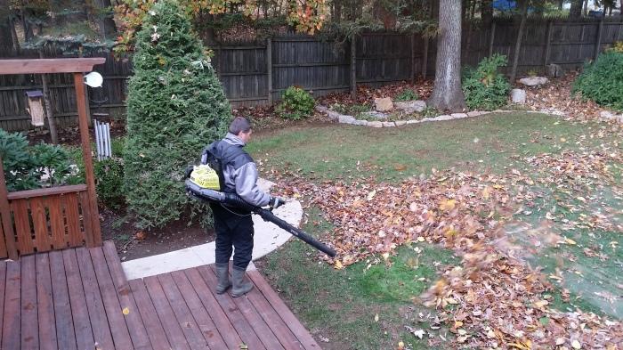 En ja... die bomen laten ook hun bladeren vallen. Bladruimtijd!!!